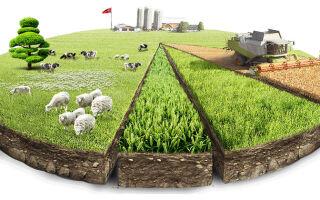Категории и виды разрешенного использования земель: какой участок годится под застройку?